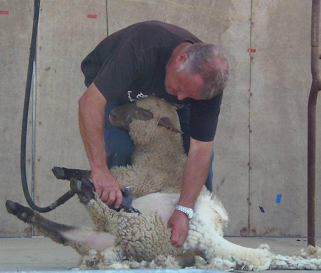 La 28 ème Fête du Mouton - article du 18 juillet 2015